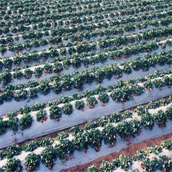 某农业区地膜