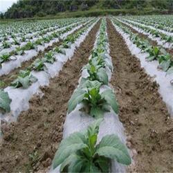 某农业地区农膜