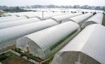 贵州塑料大棚10