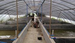 美蛙养殖场