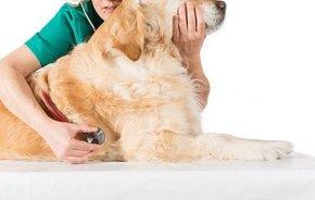 贵阳宠物诊疗