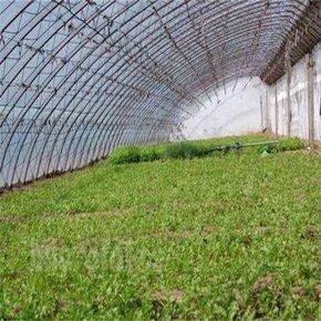 贵州温室大棚