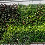 贵阳植物墙制作公司
