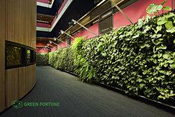 立体绿化的价值