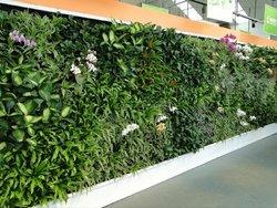 立体绿化是指除平面绿化以外的所有绿化