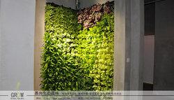 办公室里的绿色植物墙
