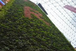 成都植物墙的价值几何?