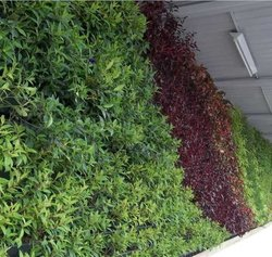 成都植物墙原理