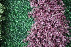 成都绿化墙的作用以及主要栽植形式有哪些?
