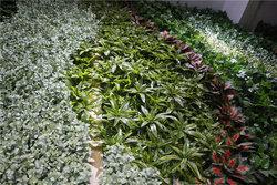 成都墙面绿化的植物配置应注意三点
